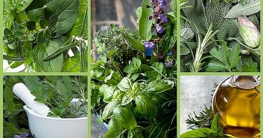 Herb Profiles | Small Online Class for Ages 11-17 | Outschool