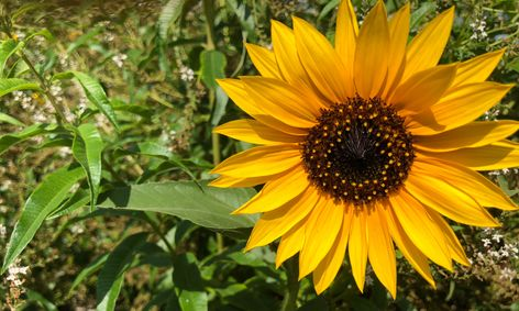 Sunflowers Garden Science Art Small Online Class For Ages 5 8