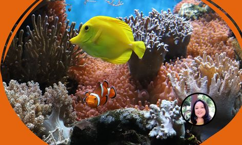 Let S Scuba Dive In A Coral Reef Coral Reef Drawing Small Online Class For Ages 7 9 Outschool