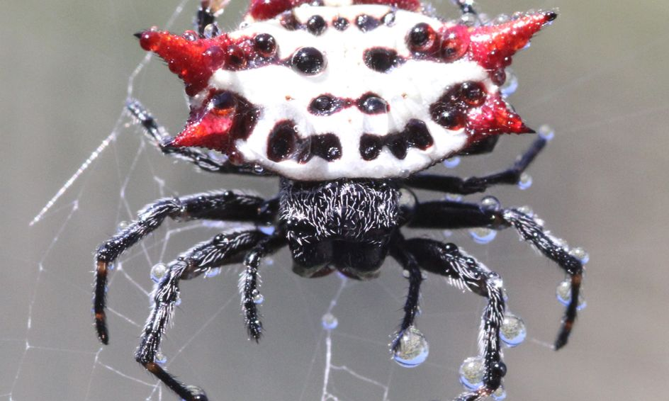 Amazing Arachnids, A Beginner Class to The Craziest ...