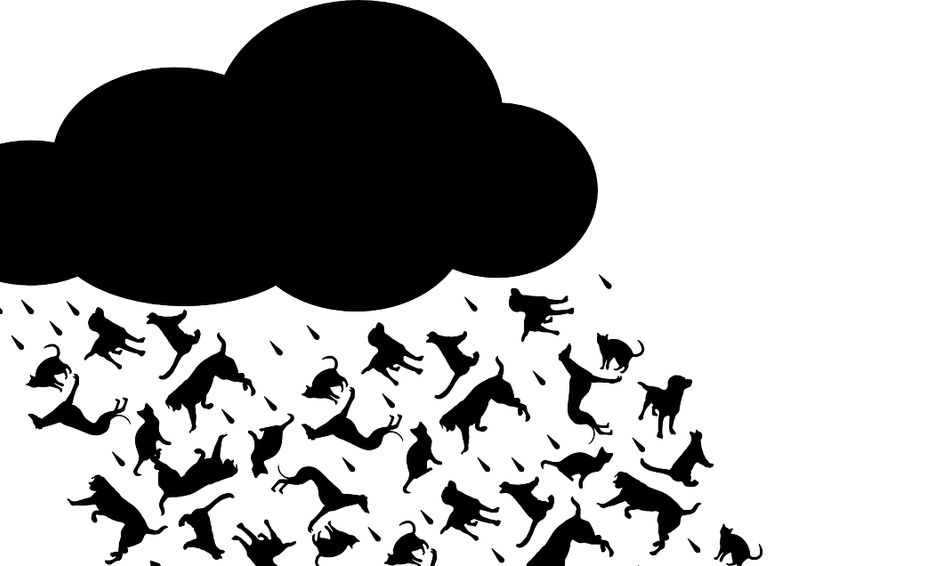 Playing With Words 3 It S Raining Cats Dogs And Idioms Small Online Class For Ages 8 11 Outschool