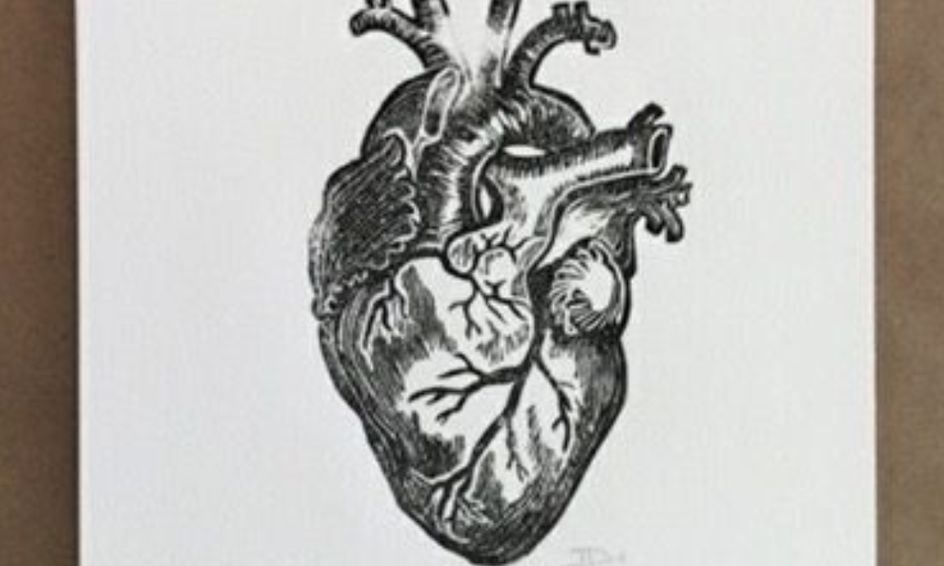 The Human Heart Small Online Class For Ages 11 16 Outschool