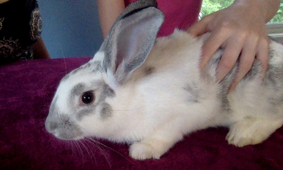 Why Rabbits Make The Best Pets Including A Live Rabbit Small Online Class For Ages 6 11 Outschool