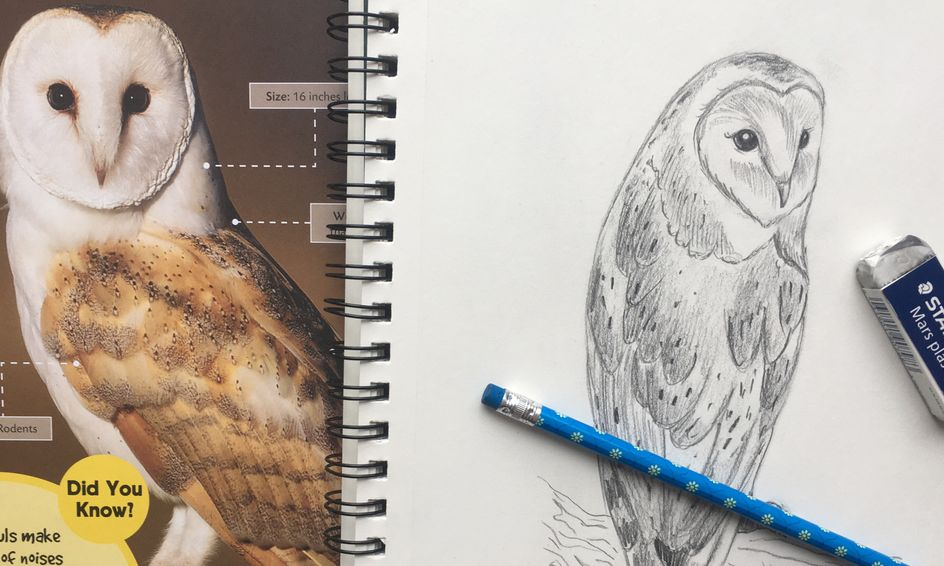 Learn To Draw A Realistic Owl Small Online Class For Ages 8 12 Outschool