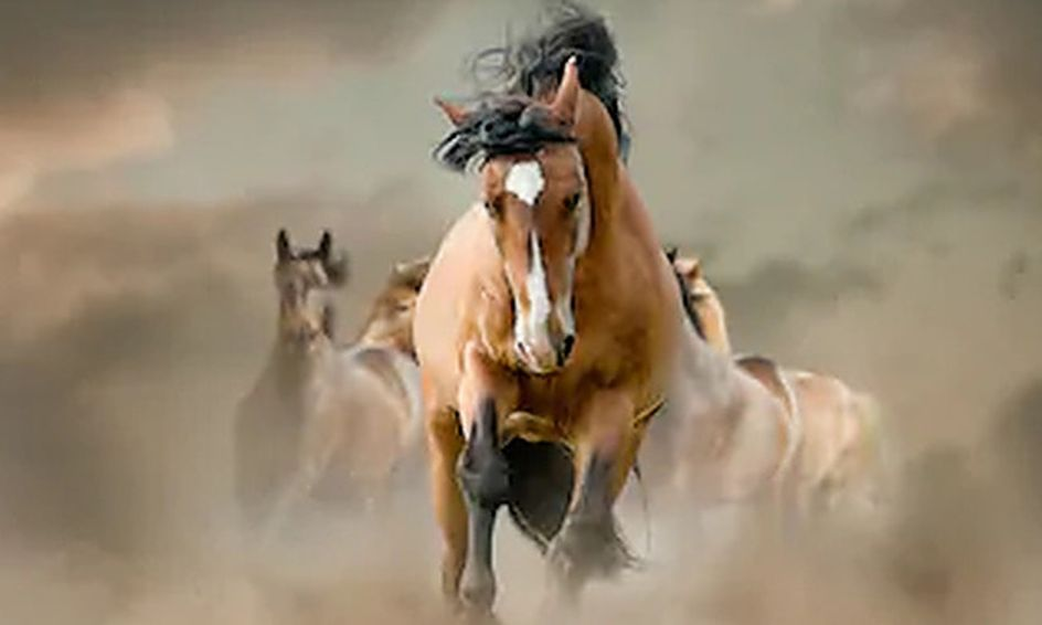 Wild Mustang Horse Camp Fall Schedule Small Online Class For Ages 9 14 Outschool