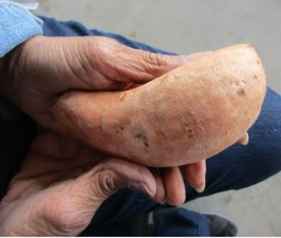 Sweet Potato, Family Recipe