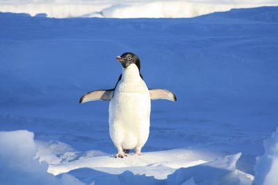 this is the closest i could get to my penguin because i couldn't find it :(