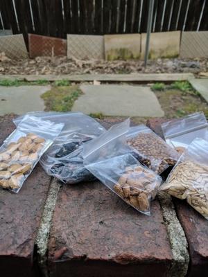 Seeds for 2017's garden.