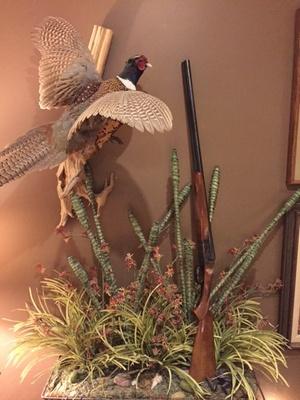 Shotgun along with a pheasant