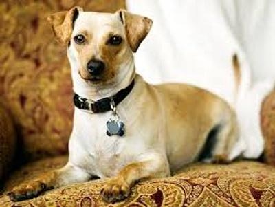 a dog like Rayo