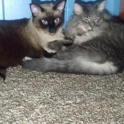Cute fuzzy cats