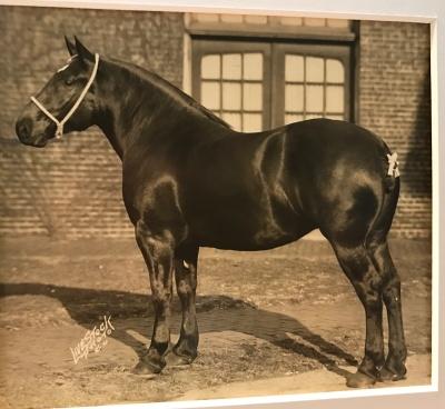 Carino's Bonnie-prized horse