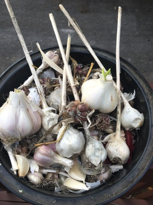 Uncle Sal's famous garlic