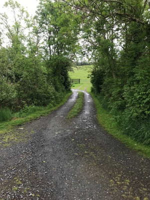 Looking down the path to the family farm
