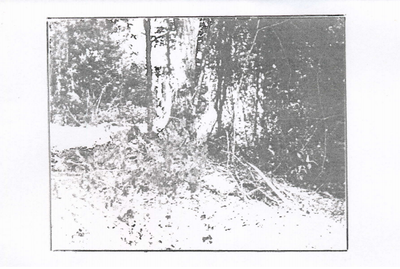 Blurry photo of land in Bovina, MS. 1990s.